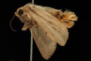 ( - 2005-ONT-1717)  @12 [ ] CC-0 (2010) CBG Photography Group Centre for Biodiversity Genomics