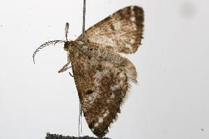 ( - 2006-ONT-0356)  @13 [ ] CC-0 (2010) CBG Photography Group Centre for Biodiversity Genomics