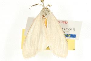 (Cycnia oregonensis - 2006-ONT-1282)  @15 [ ] CC-0 (2010) CBG Photography Group Centre for Biodiversity Genomics