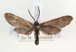 (Astyloneura monotona - AfAstmonT020)  @11 [ ] Unspecified (default): All Rights Reserved  Unspecified Unspecified