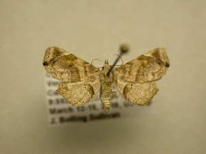 (NoctuidJBS - 11-CRBS-2035)  @14 [ ] No Rights Reserved (2010) James Sullivan Research Collection of J. B. Sullivan