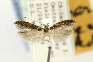 ( - EMEC80284)  @11 [ ] Copyright (2012) Unspecified Essig Museum of Entomology
